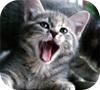 Игра Пазл: Котёнок