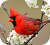 Игра Пазл: Красная птичка