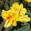 Игра Арканоид: Цветы