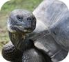 Игра Пятнашки: Сухопутная черепаха