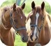 Игра Пазл: Чудесные лошадки
