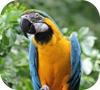 Игра Пятнашки: Попугай