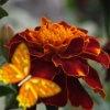 Игра Королевство цветов: Садовые