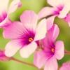 Игра Пазл: Прекрасные цветы
