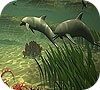 Game Big dolphins slide puzzle