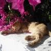 Игра Пазл: Котик в цветах