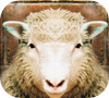 Game sheep jigsaw puzzle