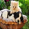 Игра Передвижной пазл:Собаки и кошки
