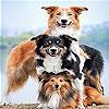 Игра Передвижной пазл: Семейство собак
