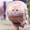 Игра Собери толстого кота