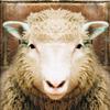 Игра Пазл: Овечка
