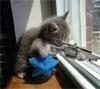 Игра Котик-снайпер