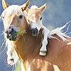 Игра Передвижной пазл: Лошадки