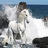 Игра Передвижной Пазл: Дикие белые лошади