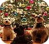 Игра Пятнашки: Рождество