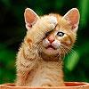 Игра Пятнашки: Милый котик