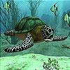 Игра Пятнашки: Морская черепаха