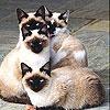 Игра Пятнашки: Кошки