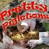 Игра Парные картинки: Свинки