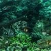 Игра Поиск отличий: Подводные тайны