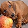 Игра Пазл: Собака на яблоке