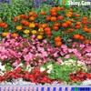 Игра Поиск сердец: Цветочный сад