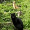 Игра Пазл: Кошачье трио