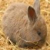 Игра Пазл: Милые кролики
