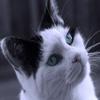 Игра Пазл: Голубые глаза