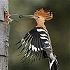 Игра Передвижной пазл: птичка