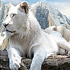 Игра Пазл: Королевская кошка