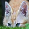 Игра Пазл: Прячущийся кот