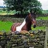 Игра Пазл: Любопытная лошадь