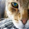 Игра Пятнашки: Кот