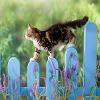 Игра Пятнашки: Котик на заборе