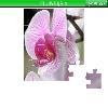 Игра Пазл: Цветы 4