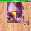 Игра Пазл: Цветы 6