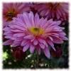 Игра Пазл: Чудесные цветы