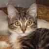 Игра Пазл: Котенок