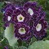 Игра Пазл: Пурпурные цветы