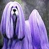 Игра Пятнашки: Необычная собачка