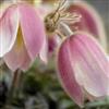 Игра Пазл: Цветы