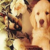 Игра Пятнашки: Собачка и птичка