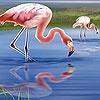 Игра Пазл: Прекрасные фламинго