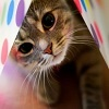 Игра Пазл: Милый котик