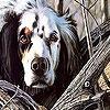 Игра Пятнашки: Собака