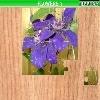 Игра Пазл: Цветы 7