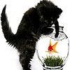Игра Пятнашки: Черный котенок