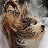 Игра Пазл: Собака и снег