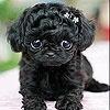 Игра Пятнашки: Черный щенок